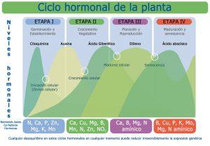 Diagrama_hormonal_de_una_planta_ESP03