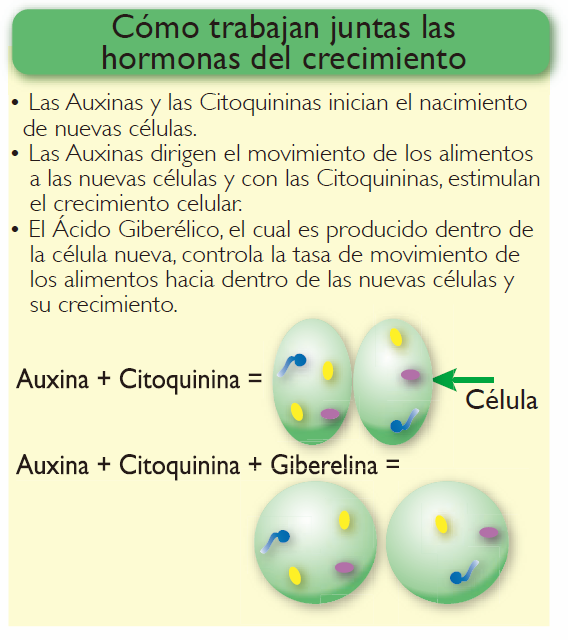 FIsiologia_vegetal_Hormonas