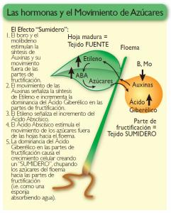Fisiologia_vegetal_Hormonas_y_movimiento_azucares