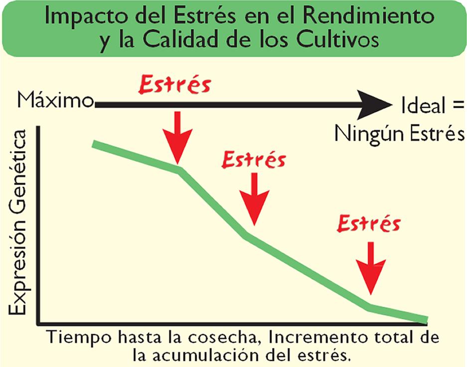 Impacto_estres_en_rendimientos