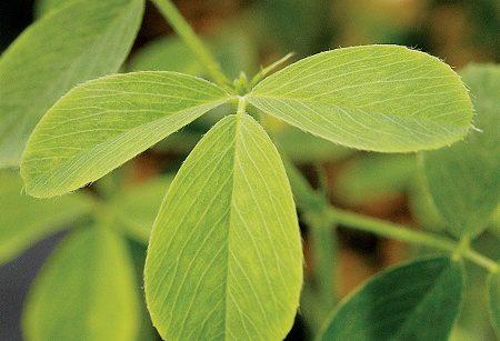 hibernación de la planta fisiologia vegetal