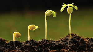 planta sparientes