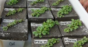 plantas PARIENTES-2