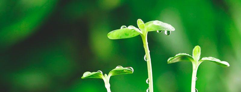 Las plantas son inmortales - FISIOLOGIA VEGETAL on