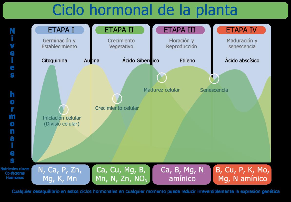 Ideas fórmulas y accesos directos para Metabolismo basal