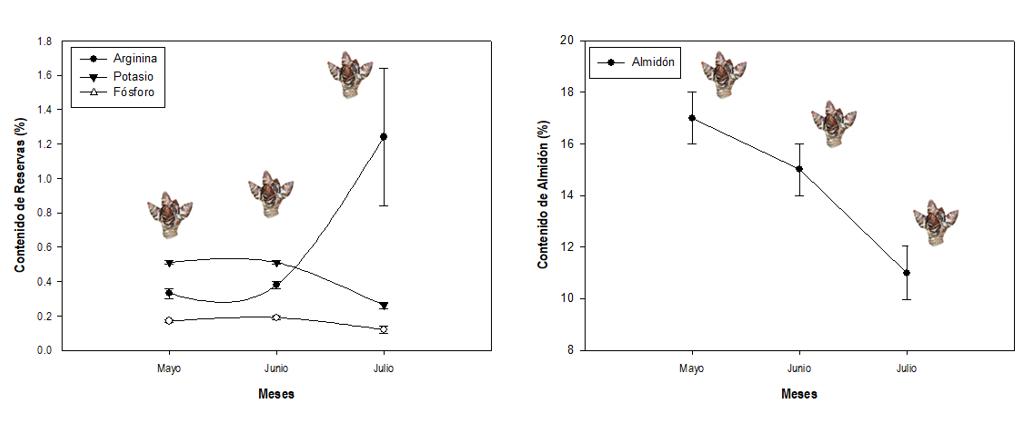 Dinámica de arginina, potasio, fósforo y almidón en dardos de Cerezo.