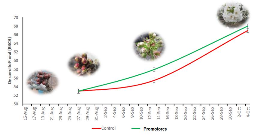 Desarrollo Floral en base escala BBCH en Cerezo