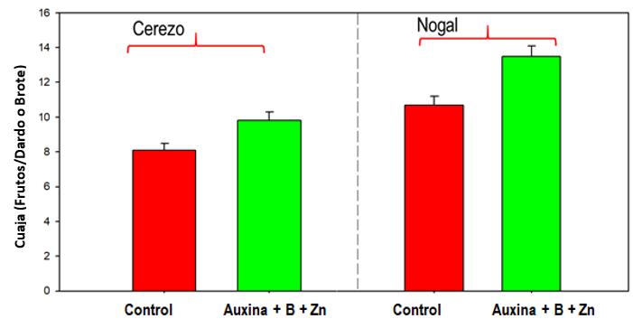 Cuaje en Cerezo cv. Bing y Nogal cv. Serr en ensayos realizados
